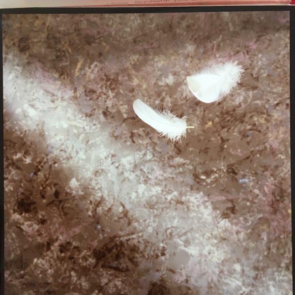 Kajagoogoo Original Master Artwork For The Debut Album Feathers